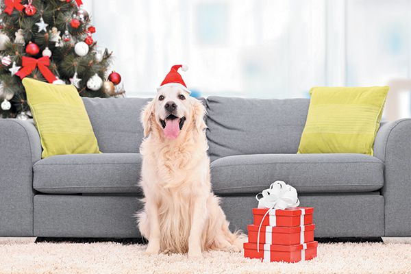 A happy dog with a Christmas tree and presents. Photography ©Ljupco